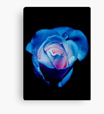 Rose Delight Canvas Print