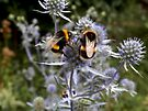 Busy as two bees by CiaoBella