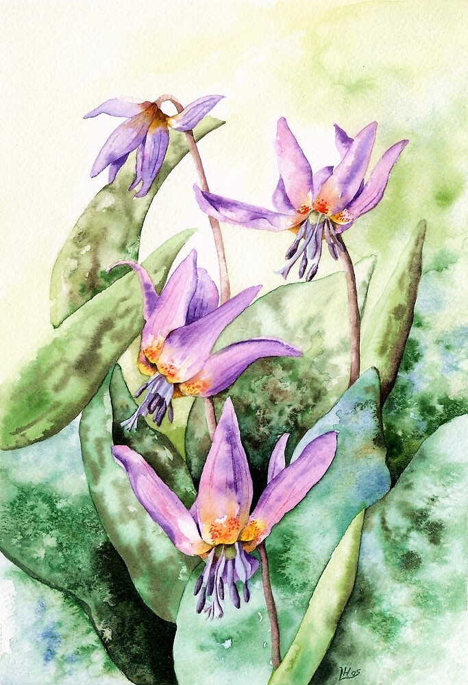Dog's Tooth Violet (watercolour on paper) by Lynne Henderson