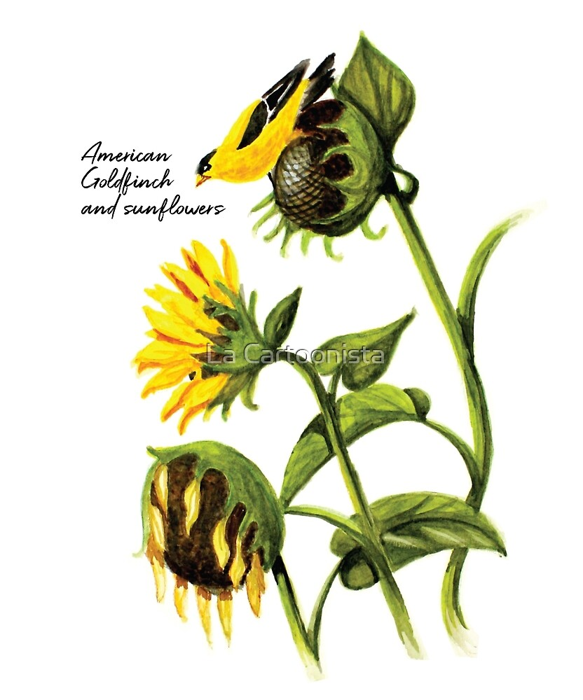 Watercolor painting of an American Goldfinch (Carduelis tristis) with sunflowers by Michele Paccione