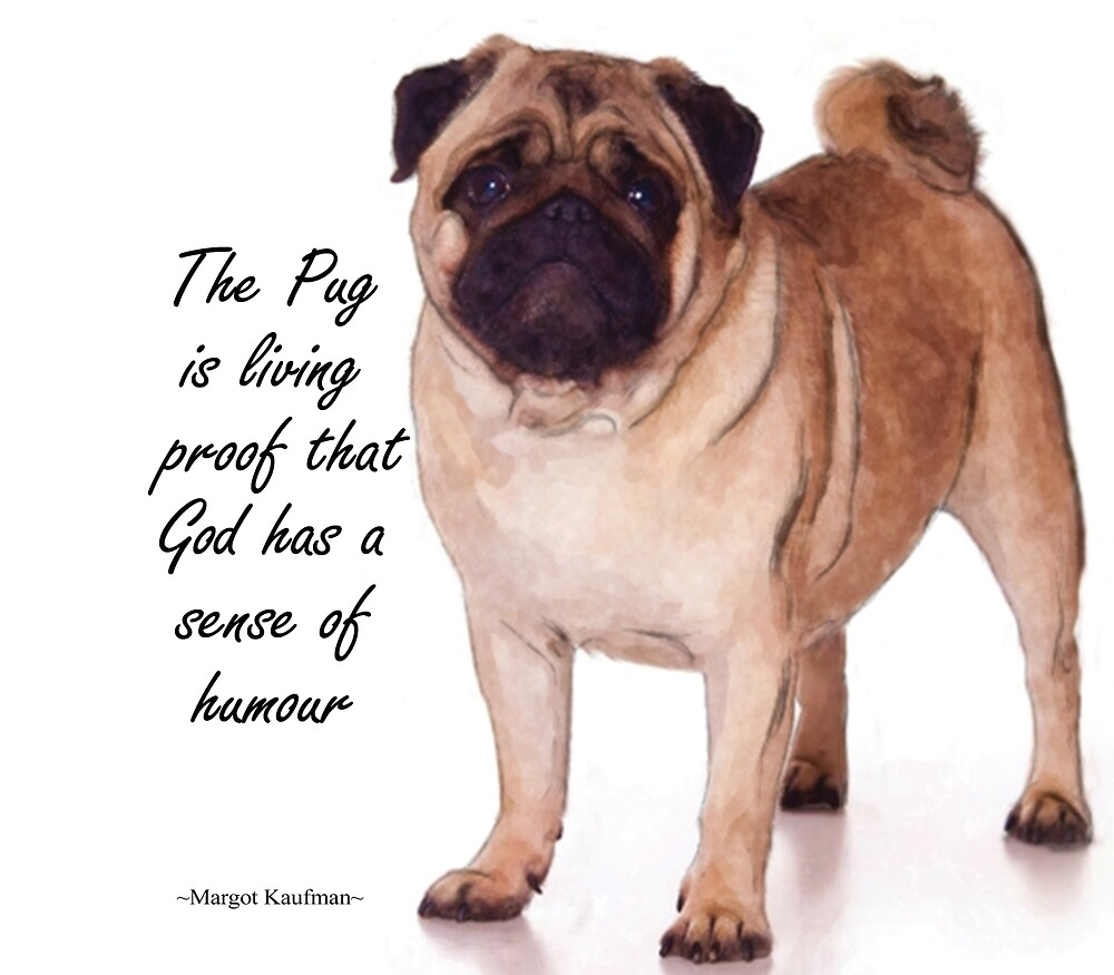Pug: God has a sense of humour by igspence