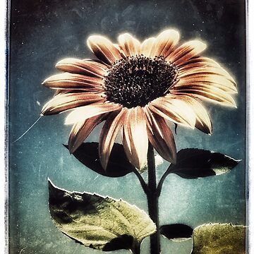 Sunflower by iamsla