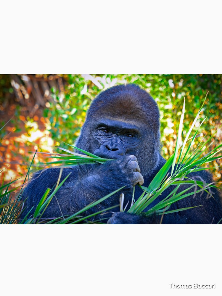 Gorilla Looking Right At Me by imagetj