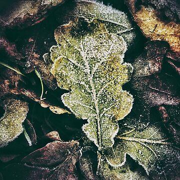 Frost on Fallen Leaves by iamsla