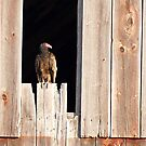 Home to a Turkey Vulture by DigitallyStill