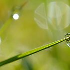 Two Little Balls by relayer51