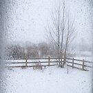 Belated Winter by Pamela Hubbard