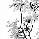 Star Magnolia Trellis 9165 Black and White  by Candy Paull