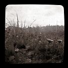 From The Ground Up Ttv by Jessica Hardin
