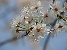 ~Spring Frills~ by NatureGreeting Cards ©ccwri