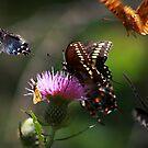 Butterflies! by believer9