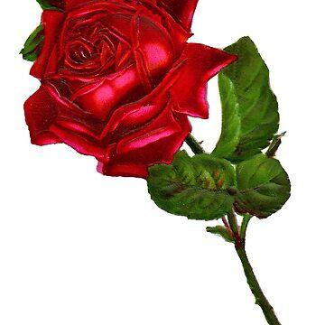 Kazzlik - Roses  by Kazzlik