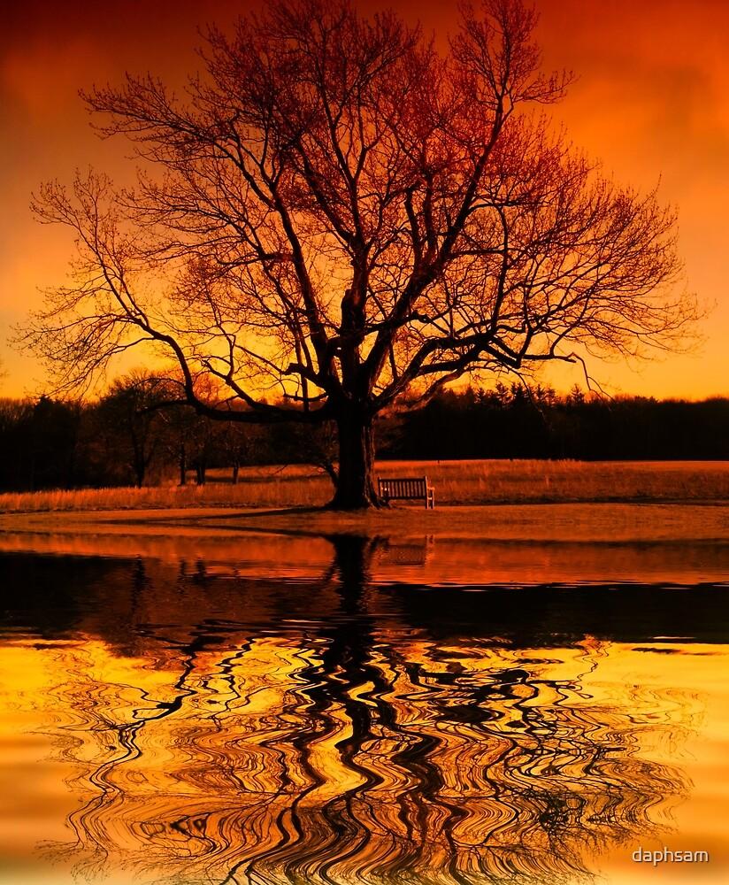 Sunset Thinking by daphsam