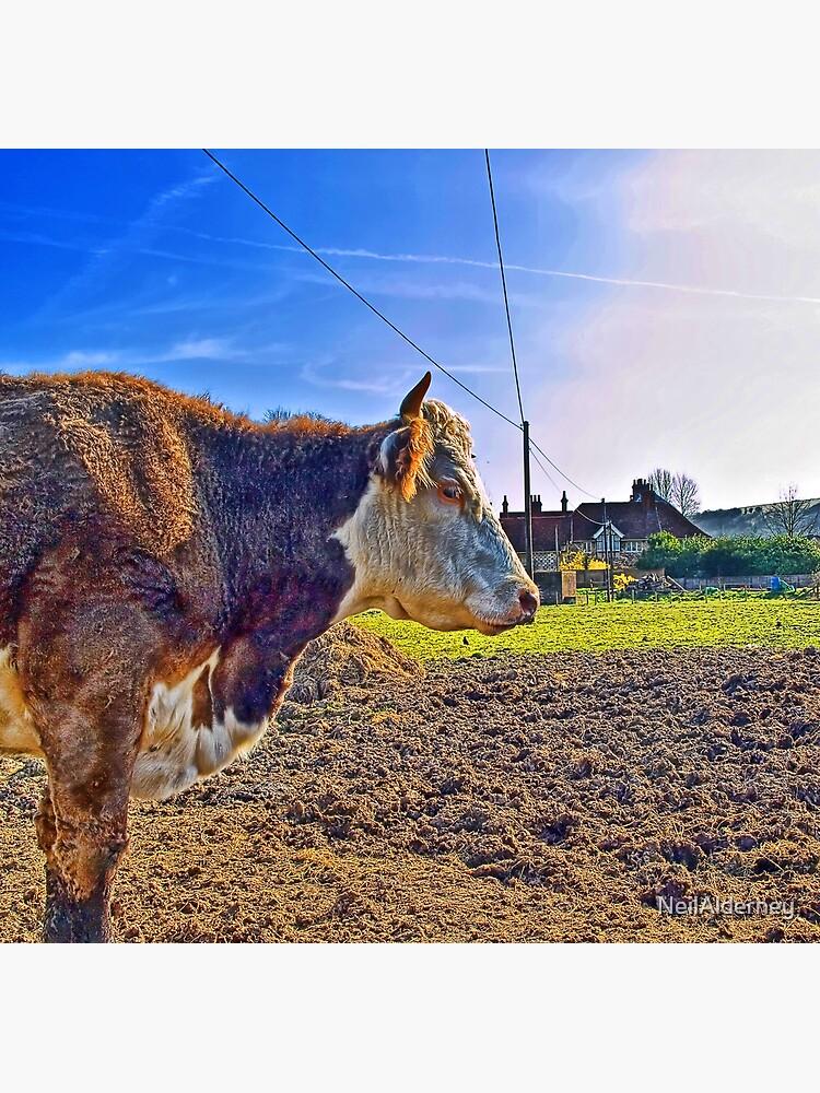 No Bull! by NeilAlderney