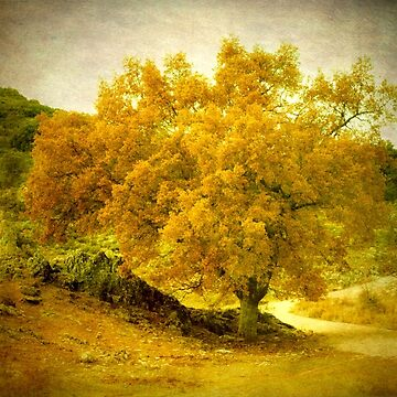 vintage old tree  by p-insolito