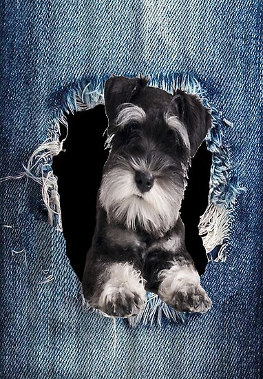 3D Schnauzer best gift for lovers by kimoufaster