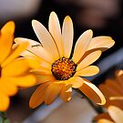 Yellow Floral by Clayton Bruster