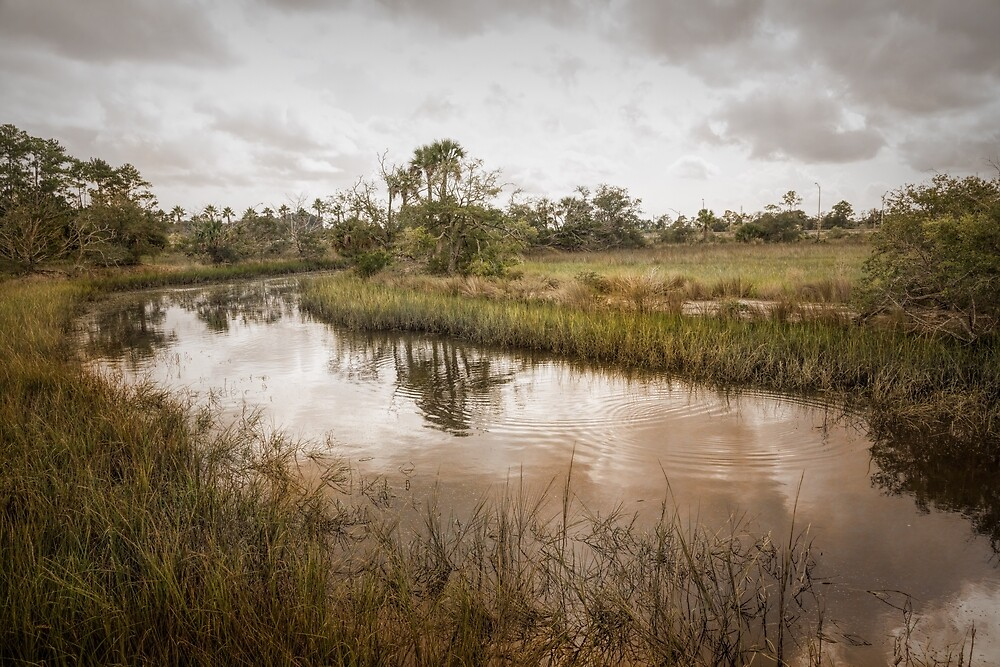 Wetland Habitat by John Bailey