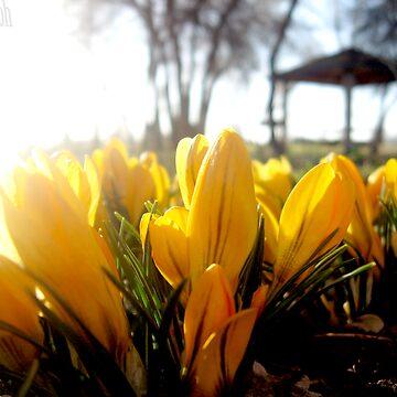 Wake Up Sunshine by lemon-oh