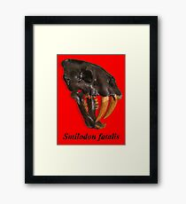 Smilodon fatalis, the Sabre Toothed Cat Framed Print