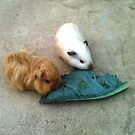 Guinea pigs eating leaf by cocodesigns