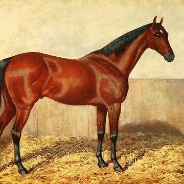 Vintage Stabled Horse Illustration (1905) by BravuraMedia