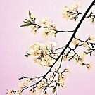 The Grace of Spring 3116 Pink by Candy Paull