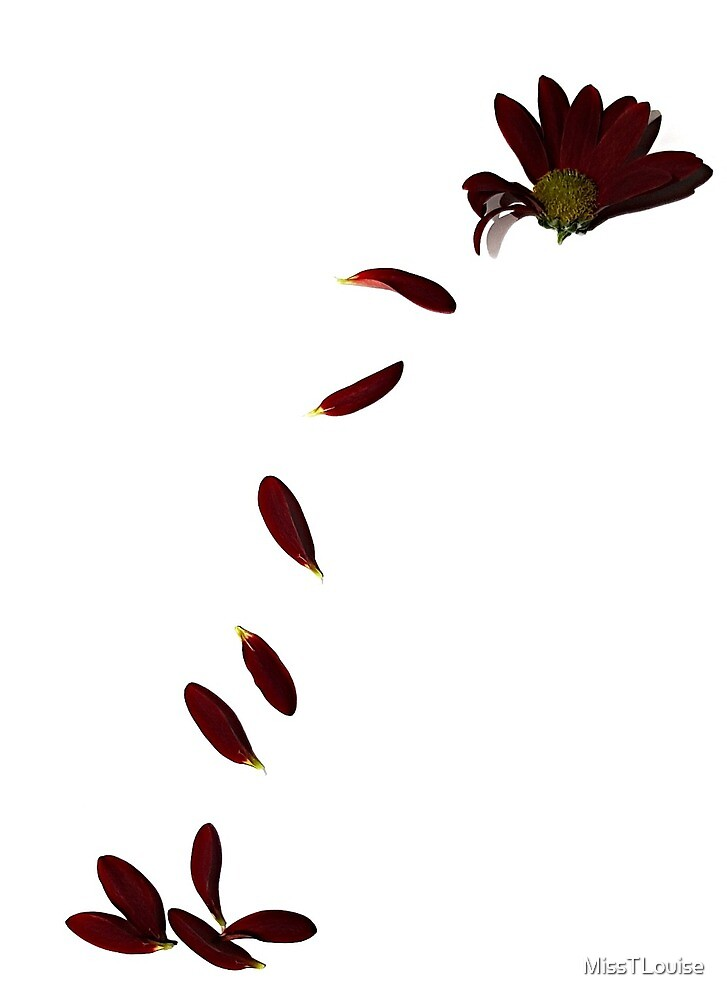 The flutter of petals by MissTLouise