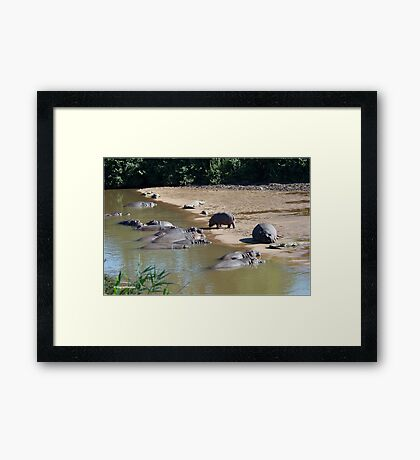 LIVING IN HARMONEY - THE NILE CROCODILE - Crocodylus niloticus AND THE HIPPO - Hippopotamus amphibious   -   SEEKOEI Framed Print