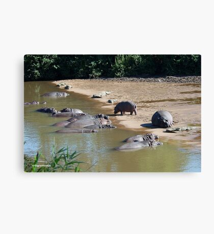 LIVING IN HARMONEY - THE NILE CROCODILE - Crocodylus niloticus AND THE HIPPO - Hippopotamus amphibious   -   SEEKOEI Canvas Print