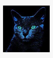 BLUE CAT ON BLACK Fotodruck