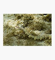 Pipefish Photographic Print