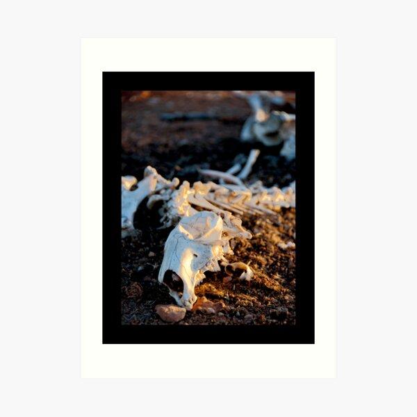Ningaloo bones Art Print