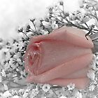 Peach Rose Bouquet Tossed in the Snow by Sherry Hallemeier