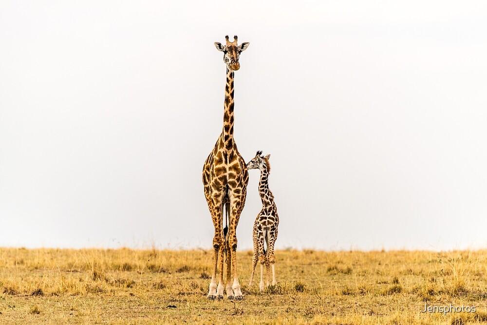 Love and Trust - Giraffe Mum and Bub by Jensphotos