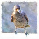 Jackdaw Watercolor by taiche