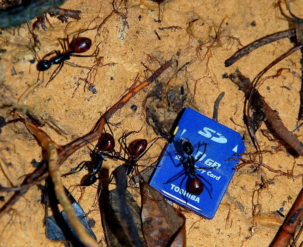 Monster Antz Gone Digital by mrdiyones