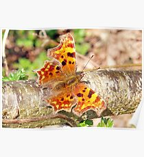 Comma Butterfly 2009 Poster