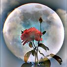 Moon Flower by R&PChristianDesign &Photography