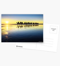 The Cable Beach Camels Postcards