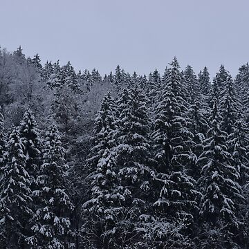 Snowy forest by helpmepaymyrent
