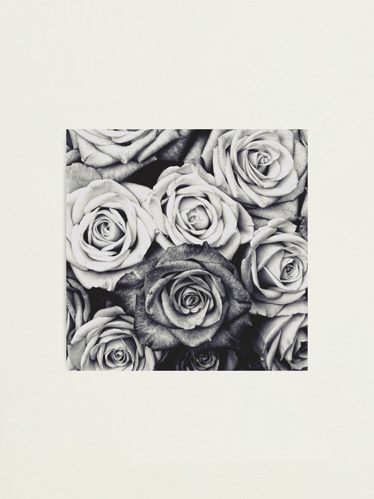 Alternate view of Roses Photographic Print
