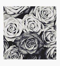 Lámina fotográfica Rosas