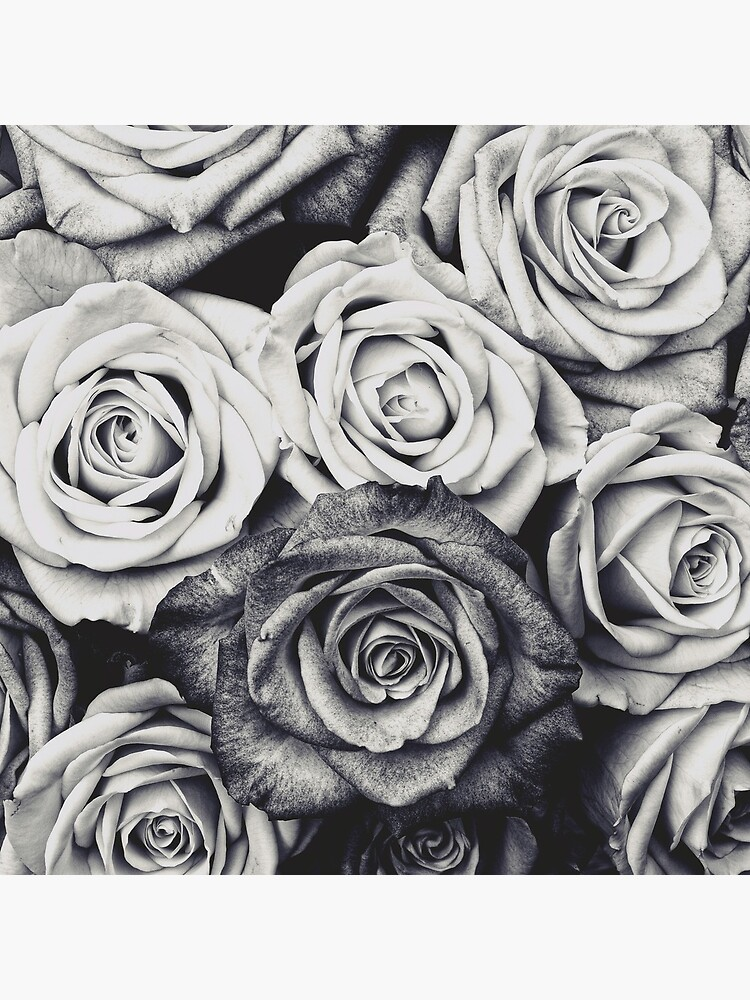 Roses by adelemawhinney