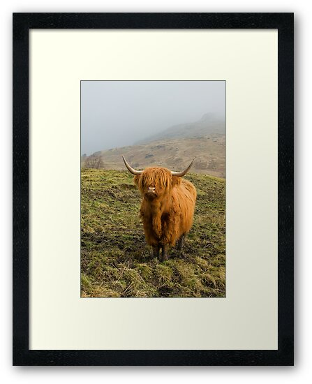 Highland Coo on a misty hillside. by Empato Photography