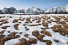 Winter Fields by Mieke Boynton