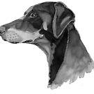 Doberman by doggyshop
