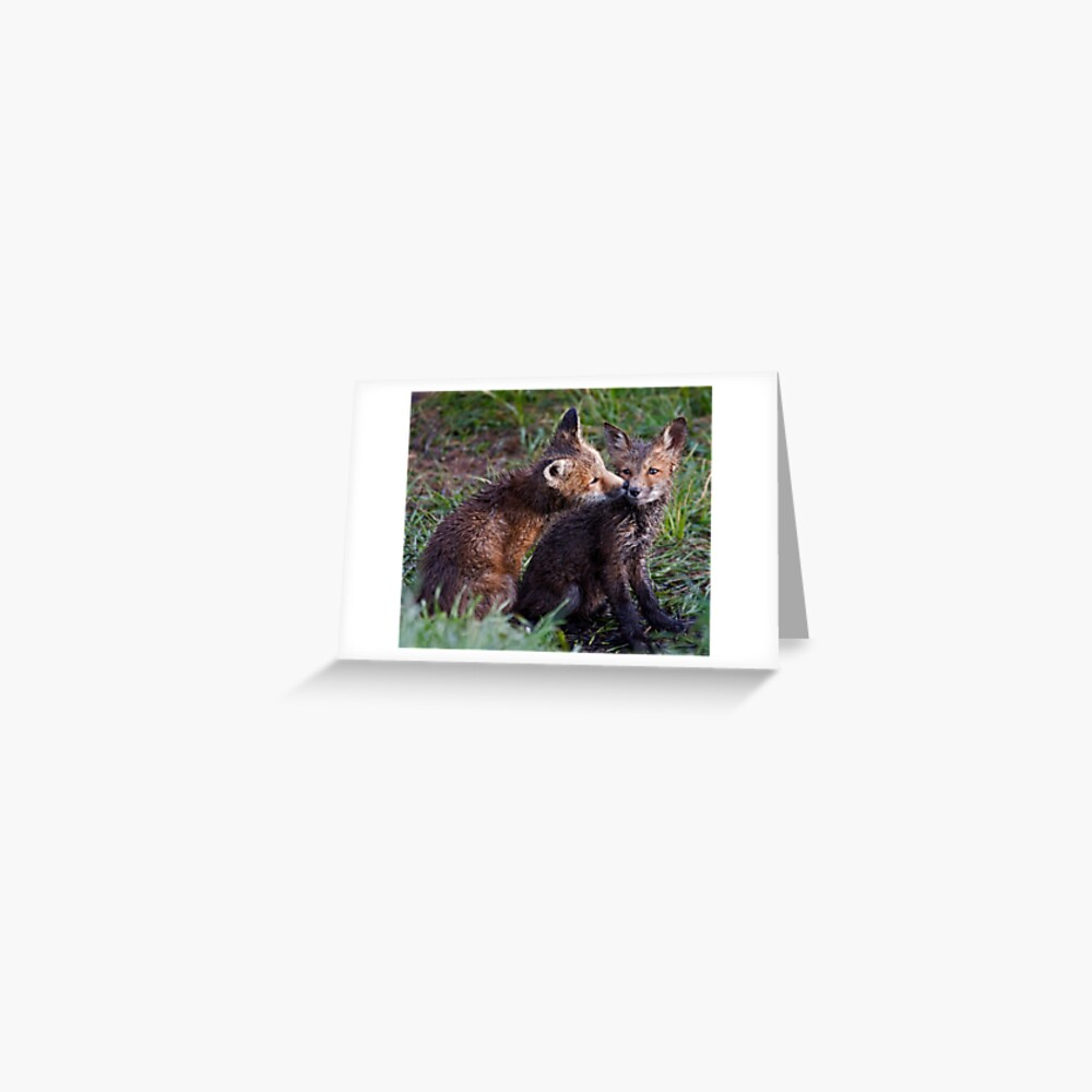 Fox Kits Drenched and Nuzzling Greeting Card