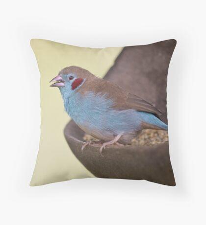 Red-cheeked Cordon Bleu Throw Pillow