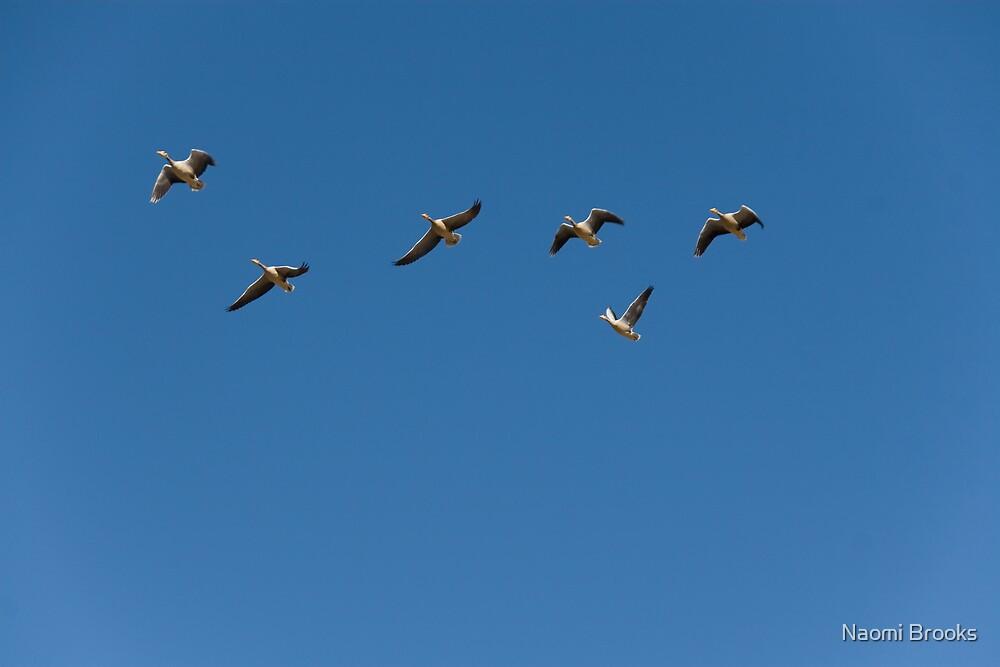 Birds by Naomi Brooks